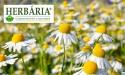 A Herbária jelenleg a márkaismertségének erősítésére fókuszál