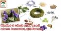 Adventi koszorúkészítés az Oázis Kertészetekben