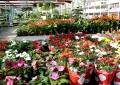Székesfehérváron nyílik meg az Oázis Kertészet 19. egysége