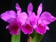 Hétvégén kerül megrendezésre a Tavaszi Orchidea- és Bromélia Kiállítás az Oázis Kertészet támogatásával