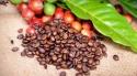 Klímaváltozás és a kávétermelés