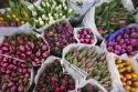 Közép-Európa legnagyobb nagybani virágpiaca